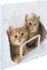 Kinderalbum Katzen